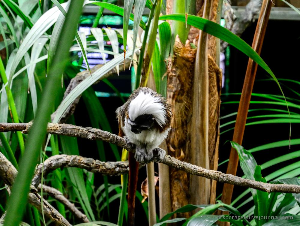 Скансен музей под открытым небом в Стокгольме - тропический зоопарк на территории музея