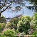 Вилла Карлотта, озеро Комо, фотогрфии сада и описание растительности, история виллы Карлотта
