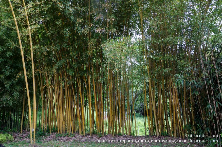 Вилла Карлотта - бамбуковый сад на территории вилы, озеро Комо