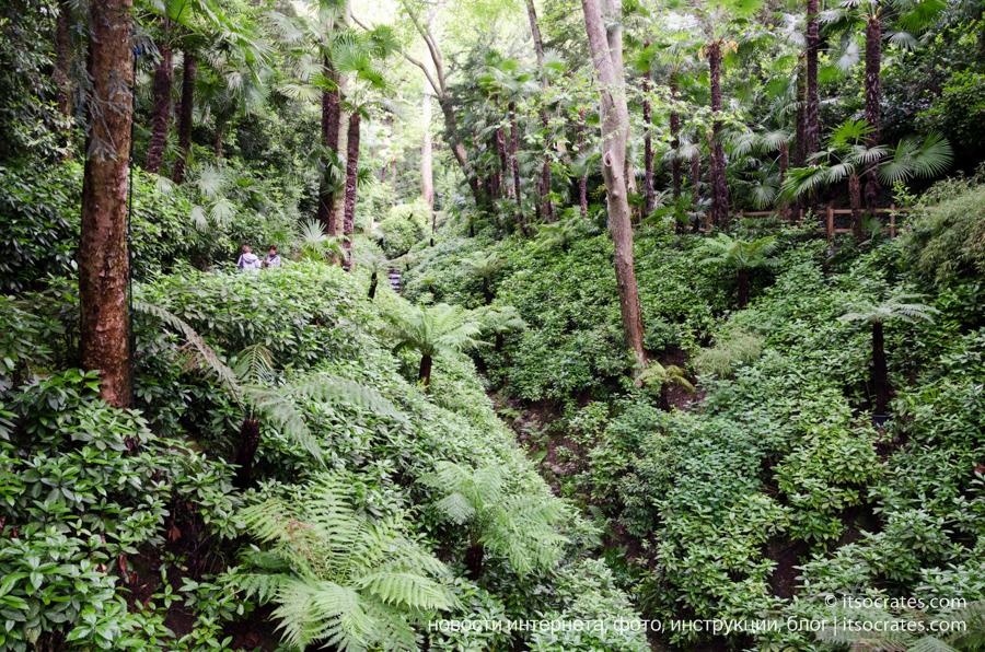 Вилла Карлотта - фото тропического леса на территории виллы на озере Комо