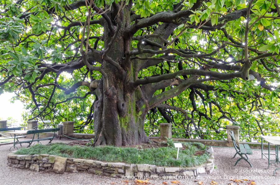 Вилла Монастеро в Варенне на озере Комо - красивые деревья в саду виллы