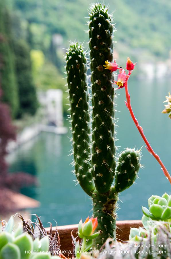 Вилла Монастеро в Варенне на озере Комо - кактус на фоне озера Комо