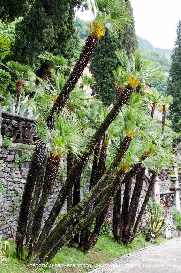 Вилла Монастеро в Варенне на озере Комо - экзотические пальмы в саду